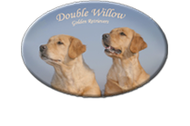 Double Willow – Allevamento di Golden Retriever Dual Purpose
