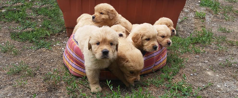 i-cuccioli