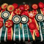 World Dog Show Lipzig 2017